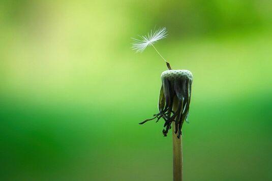 Ayurveda und Achtsamkeit – Die fünf Sinne erleben und stärken